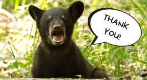 Black bear cub (Photo: Jason Mrachina)