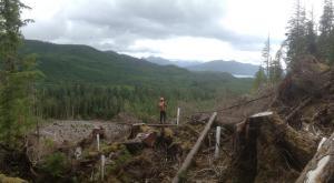 Logging in Haida Gwaii (Photo: Dru via Flickr)