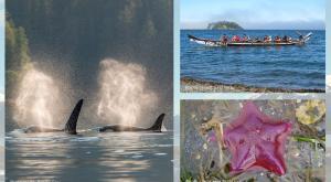 Great Bear Sea photos