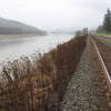 Plants sprayed with herbacide along the Skeena River